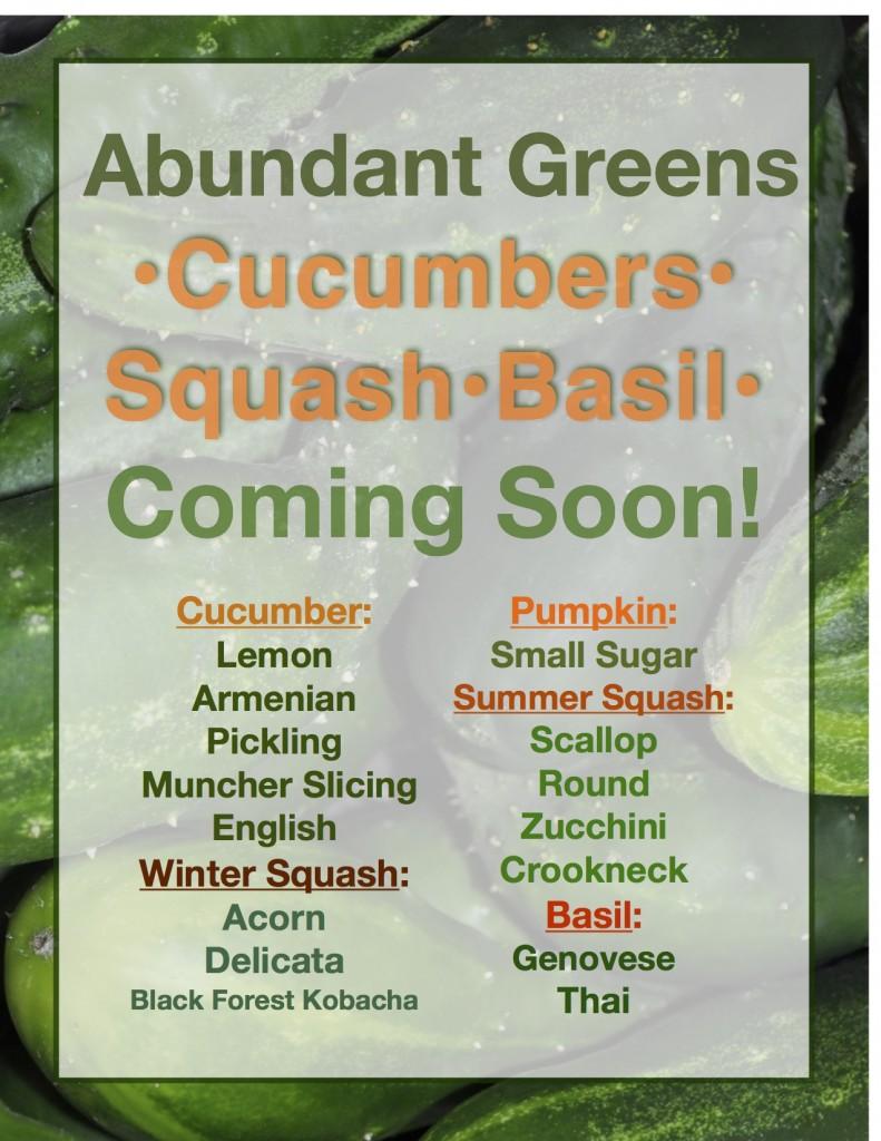 Cucumbers Coming Soon JPEG
