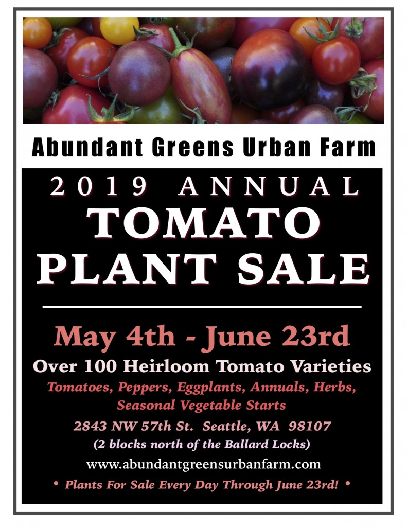 *2019 Tomato Plants For Sale jpeg